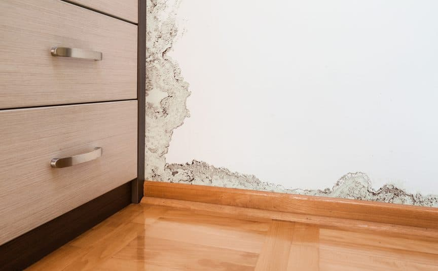 Mold on Baseboard Wall