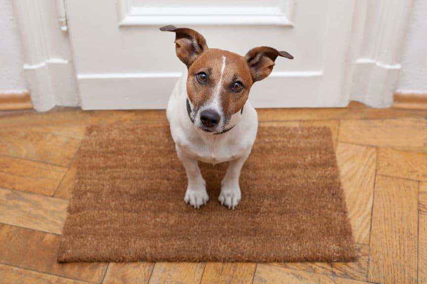 Dog In Front of Door Frame